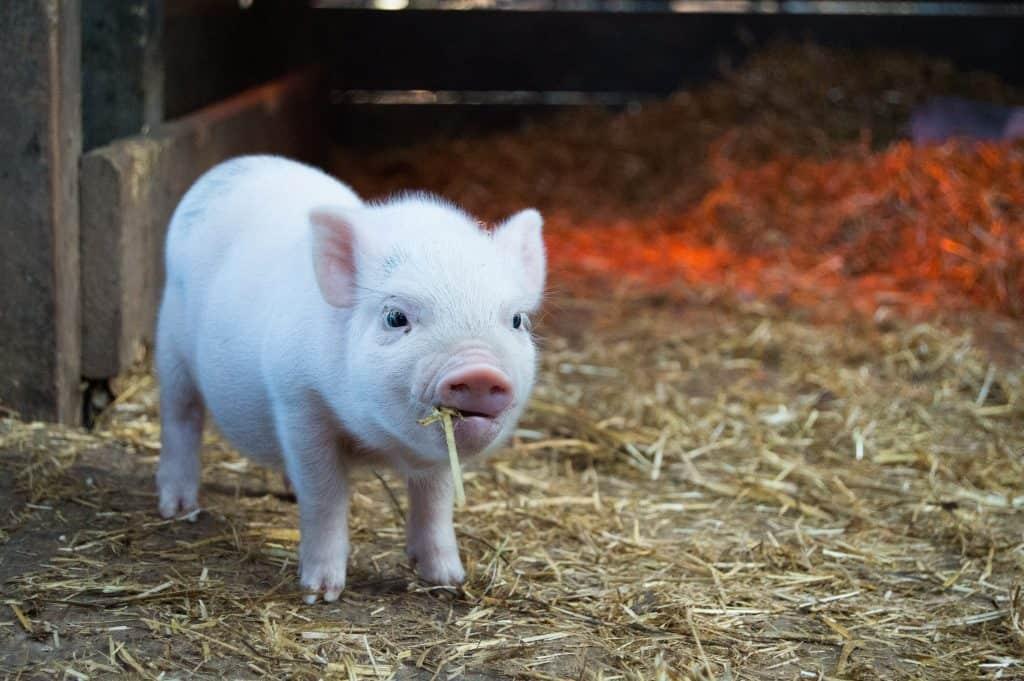 stoppen met vlees documentaire